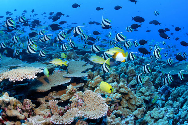Coral reef and fish.