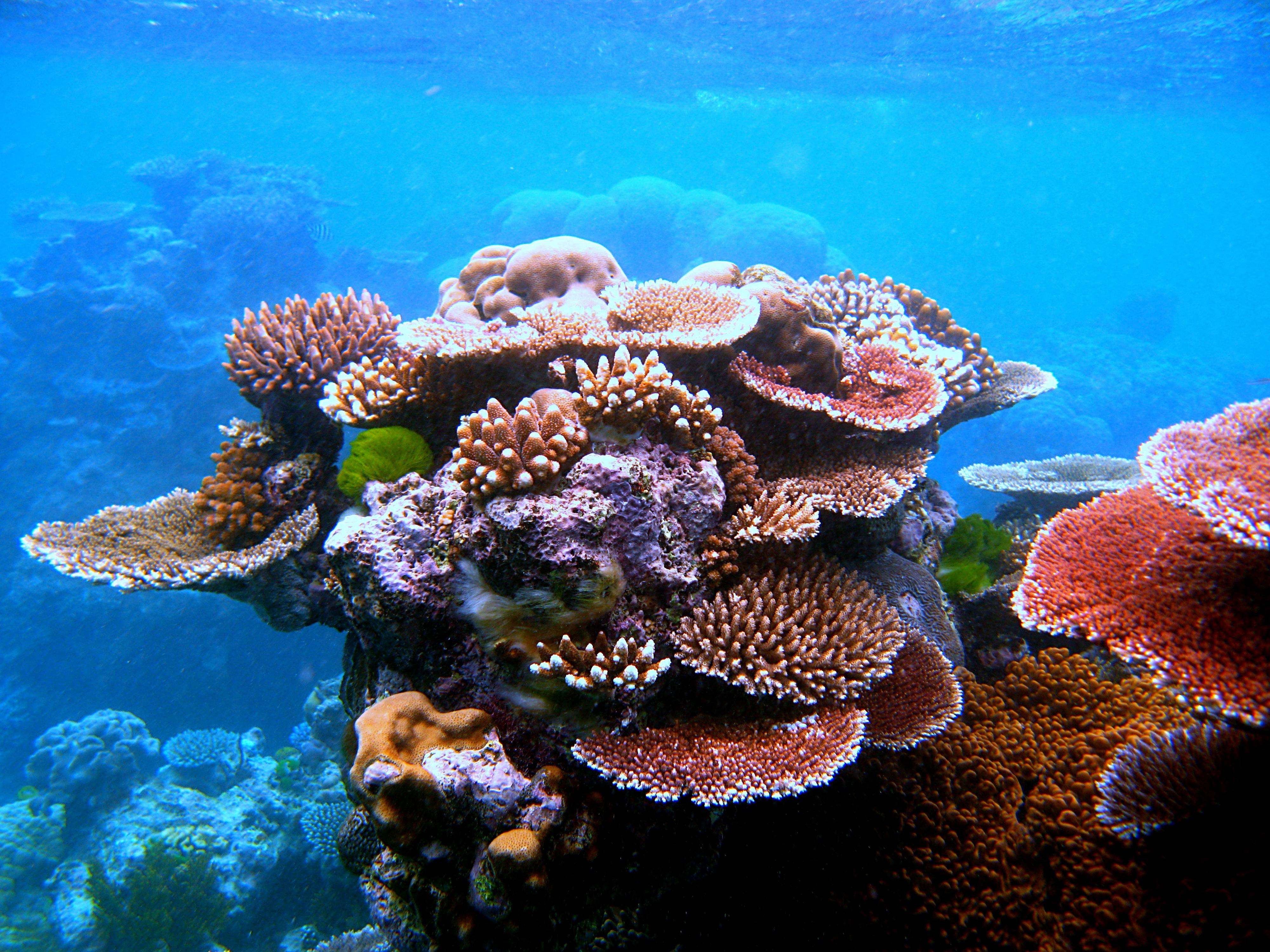 Coral_Outcrop_Flynn_Reef